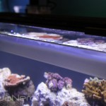 Fluval Rimless Aquarium with Hidden Water Line