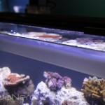 Fluval Rimless Aquarium with Hidden Water Line