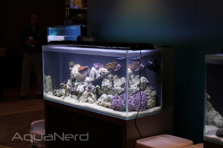 Fluval Rimless Aquarium