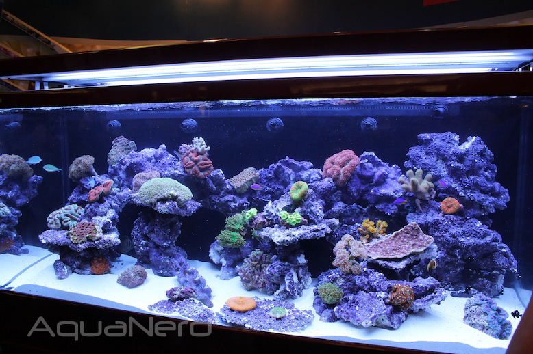Red Sea Max S 650 Reef