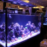 Reef Octopus Luxury Aquarium