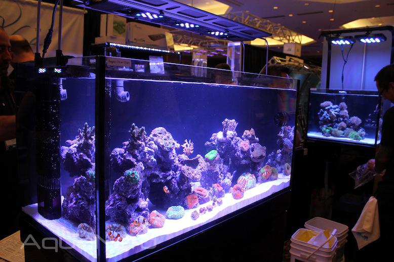 Reef Octopus Luxury Aquarium