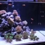 Reef Octopus Luxury Reef Aquarium