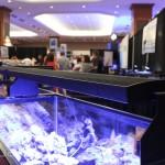 Sunbrite F-Series LED Fixture