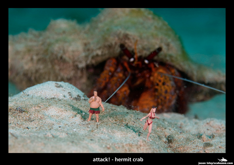 UW Attack - Hermit Crab by Jason Isley