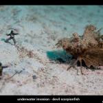 UW Invasion - Devil Scorpionfish by Jason Isley