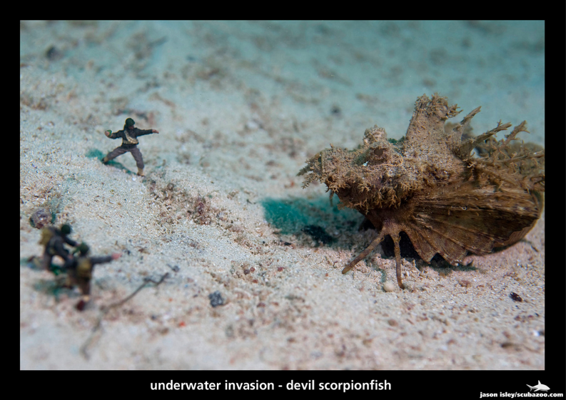 UW Invasion - Devil Scorpionfish by Jason Isley