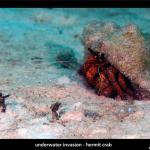 UW Invasion - Hermit Attack by Jason Isley
