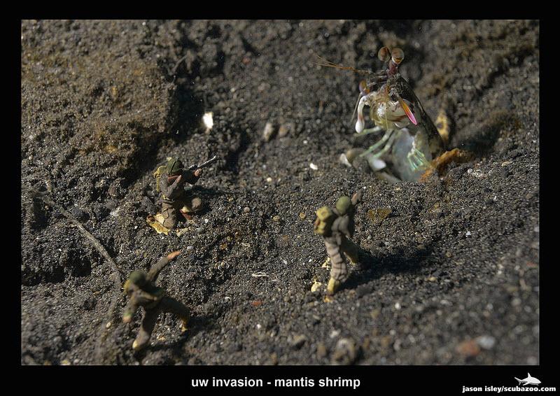 UW Invasion - Mantis Shrimp by Jason Isley