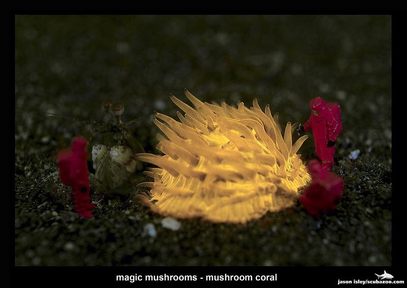 Workers - Magic Mushroom by Jason Isley