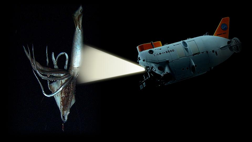 Architeuthis Squid with Shinkai 6500 Sub