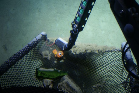 Toy Nemo Found by Submersible