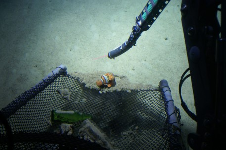 Toy Nemo Found in Caribbean