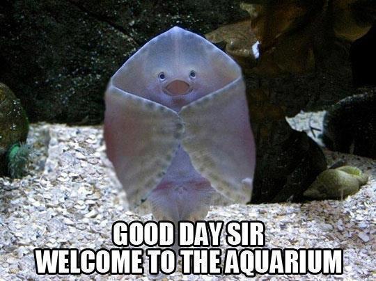 Aquarium Ray Meme