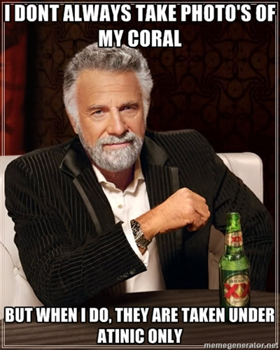 Most Interesting Actinic Coral