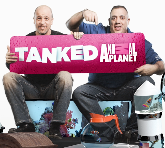 Tanked 2013