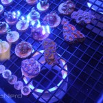 Acan Frags at NextWave