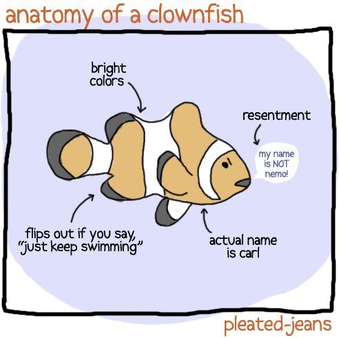 Anatomy of a Clownfish