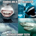 Friendly Sharks