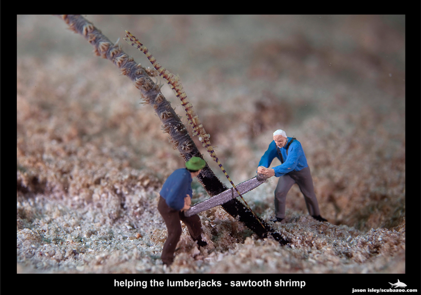 Helping the Lumberjacks - Sawtooth Shrimp by Jason Isley
