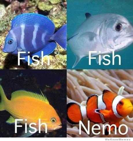 How I See Fish Nemo