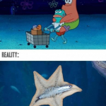 Starfish Expectation Reality