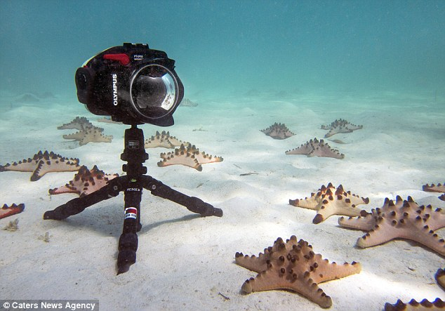 Starfish Traffic Jam