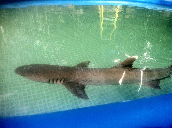 White Tip Shark Kmart Commercial