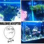 Challenge Accepted Tank