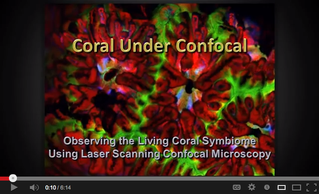 Corals Under Confocal Microscope