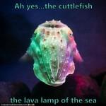 Cuttlefish Lava Lamp