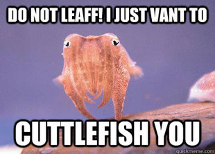 Cuttlefish You