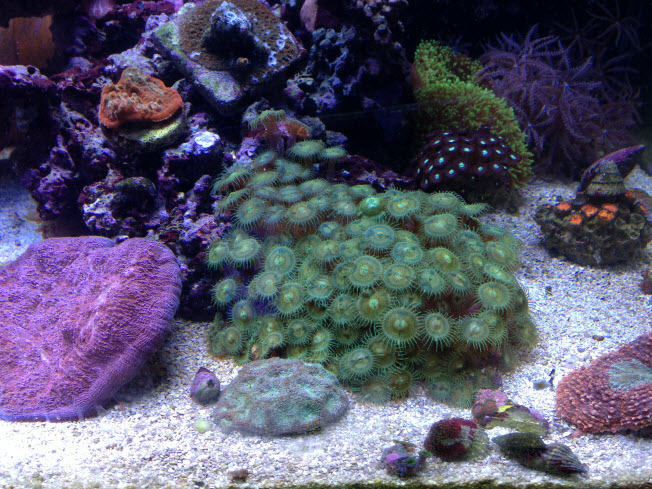 Mixed Coral Aquarium