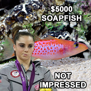 Not Impressed with Soapfish