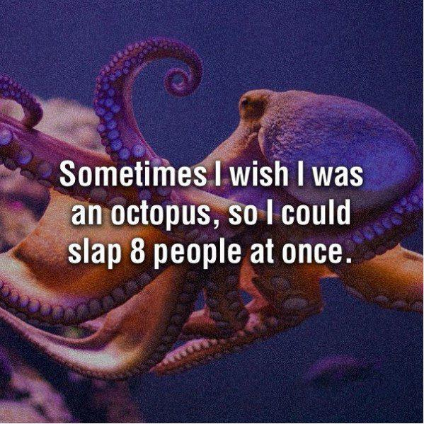 Octopus Slaps People