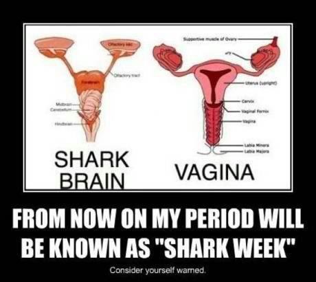 Shark Brain Vagina
