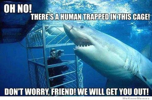 Shark Helping Trapped Human