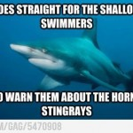 Shark Warns Swimmers
