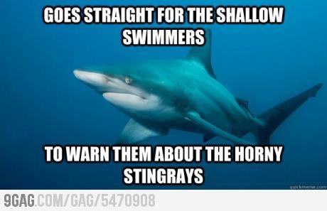 Shark Warns Swimmers