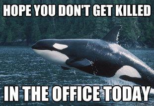 Compassionate Killer Whale Meme