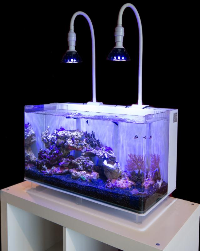 Coral Compulsion Lamp Clamp LED