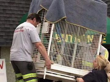 Greenwood Pets and Plants Shutdown