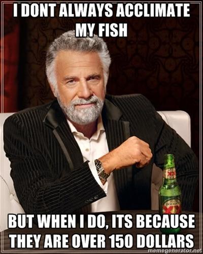 Most Interesting Man Acclimates Fish