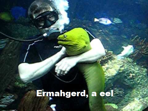 My Friend the Moray Ermahgerd