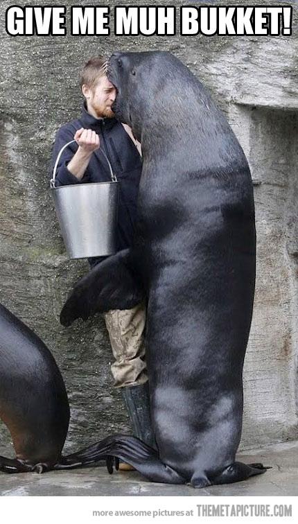 Sea Lion Give Me Muh Bukket