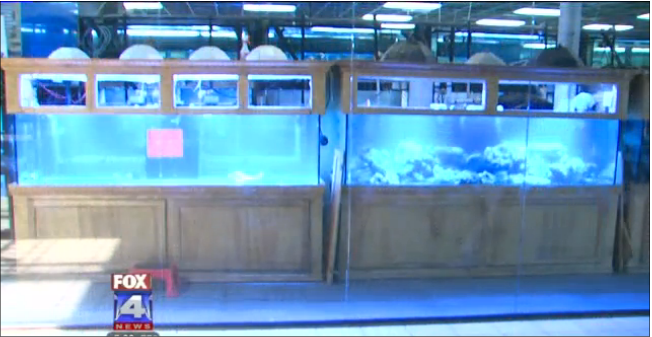 Aquariums Wholesale Vandalized Aquariums