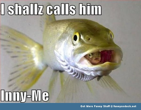 Fish Has Inny-Me
