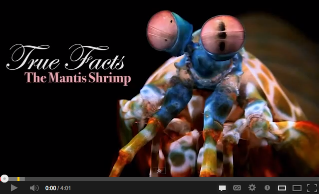 True Facts About the Mantis Shrimp