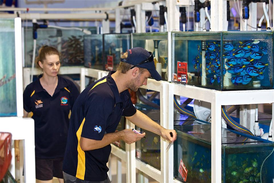 Cairns Marine Aquarist Job Opening