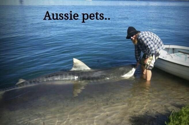 Sharks as Aussie Pets